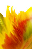 Yellow tulip petals Royalty Free Stock Images