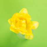 Yellow tulip. Top view close up of One Yellow tulip on Green background Royalty Free Stock Photography