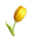 Yellow tulip, vector icon Stock Photography