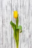 Yellow tulip on vintage white antique background royalty free stock photos
