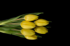 Yellow Tulips. Isolated on black background Stock Photo
