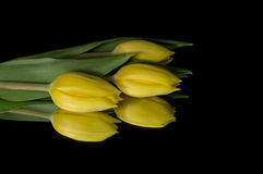 Yellow Tulips. Isolated on black background with reflection Stock Photography