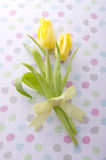 Yellow tulips. Yellow tulip bouquet with ribbon on pop background Stock Photos