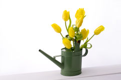 Yellow tulips. In watering can on white background Royalty Free Stock Photos