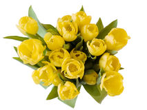Yellow tulips. A bunch of yellow tulips on white Stock Images