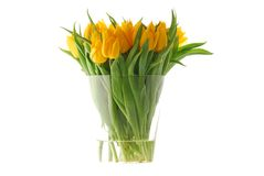 Yellow tulips. In a glass vase. It's spring Stock Photography
