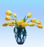 Yellow tulips Stock Images