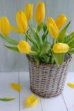 Yellow tulips in basket Stock Photo