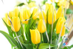 Yellow tulips, beautiful bouquet flowers close-up with blurred background royalty free stock image