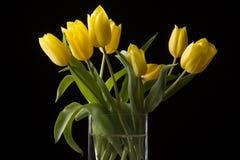 Yellow tulips on black background. Beautiful fresh yellow tulips on black background Royalty Free Stock Image