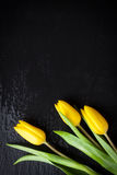 Yellow tulips on a black stone background with water droplets Stock Image