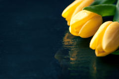 Yellow tulips on a black stone background with water droplets Stock Photography