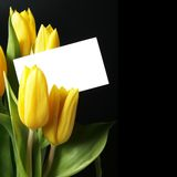 Yellow tulips with blank card Royalty Free Stock Image