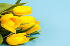 Yellow tulips on a blue Stock Images