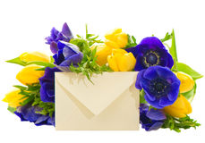 Yellow tulips and blue anemone Royalty Free Stock Image