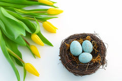 Yellow tulips and blue eggs Royalty Free Stock Images