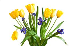 Yellow tulips and blue irises Stock Photos