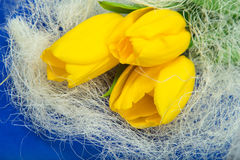 Yellow tulips and blue paper Stock Photos
