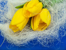 Yellow tulips and blue paper Stock Images