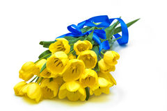 Yellow tulips with blue ribbon. Isolated on white background Stock Photos