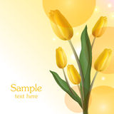 Yellow tulips bouquet card Royalty Free Stock Images