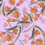 Yellow tulips bouquet of color pencil. Floral seamless pattern for design on a pink background. Flower tulip background hand illustration color pencil plants Royalty Free Stock Photography