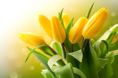 Yellow tulips bouquet Stock Photos