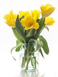 Yellow tulips bouquet on a white background Stock Images