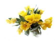 Yellow tulips bouquet on a white background Royalty Free Stock Photography