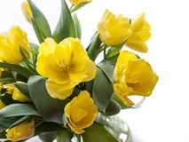 Yellow tulips bouquet on a white background Stock Photo