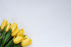 Yellow tulips. Bouquet of yellow tulips. white background Royalty Free Stock Images