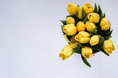 Yellow tulips. Bouquet of yellow tulips. White background Stock Images
