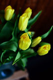Yellow tulips bouquet Stock Images