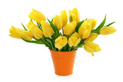 Yellow tulips in bucket Stock Image
