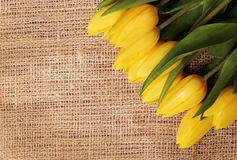 Yellow tulips on burlap background Stock Image