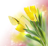 Yellow Tulips with a Butterfly. On Pink Soft Light Background stock photography