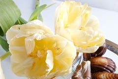 Yellow tulips and chocolates Royalty Free Stock Photo