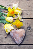 Yellow tulips and daffodils flowers  and decorative heart on woo Royalty Free Stock Image