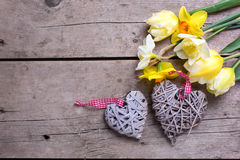 Yellow tulips and daffodils flowers  and two  decorative hearts Royalty Free Stock Image