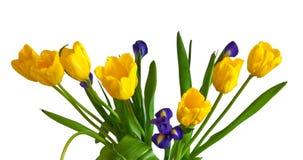 Yellow tulips and dark blue irises Royalty Free Stock Photography