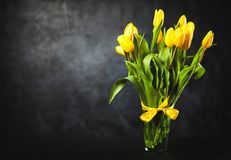 Yellow tulips on dark background. Yellow tulips on dark wall background Stock Photography