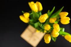 Yellow tulips on dark background Stock Image