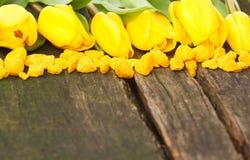 Yellow tulips and decorative stones on wood Stock Image