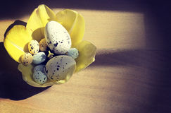 Yellow tulips and easter eggs Stock Photo