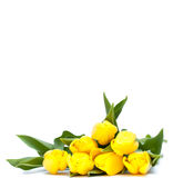 Yellow tulips and empty space for your text Stock Photo