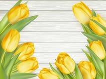 Yellow tulips. EPS 10 Royalty Free Stock Photo