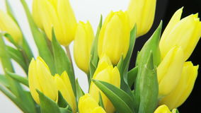 Yellow Tulips. Extreme close-up. Shot on RED Epic stock video footage