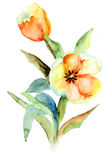 Yellow Tulips flowers. Watercolor painting Stock Images
