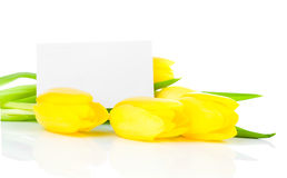 Yellow tulips flowers Royalty Free Stock Images
