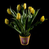 Yellow Tulips. Tulips flowers bouquet in a ceramic pot on black background Royalty Free Stock Photography